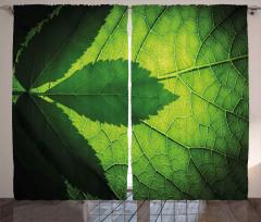 Yaprağın Arkası ve Önü Fon Perde Yeşil Doğa