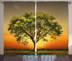 Gün Batımında Ulu Ağaç Fon Perde Yeşil Doğa
