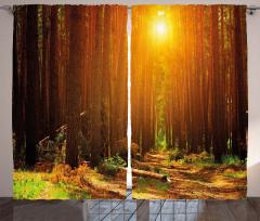 Ormanda Gün Doğumu Fon Perde Doğa Ağaç Yaprak
