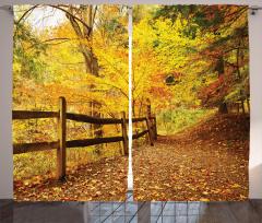 Ormanda Sonbahar Fon Perde Ağaç Yaprak Doğa Şık