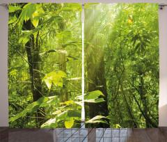 Ormanda Güneşli Bir Gün Fon Perde Gökyüzü Doğa
