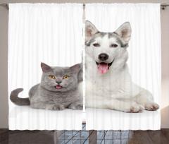 Kedi Köpek Dostluğu Fon Perde Kedi Köpek