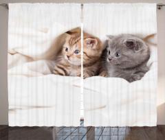 Gri Şirin Yavru Kediler Fon Perde Sevimli