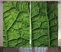 Yeşil Yapraklar ve Damarları Fon Perde Doğa Şık