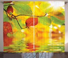 Suya Yansıyan Yapraklar Fon Perde Doğa Ağaç