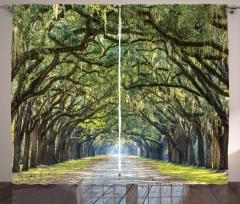 Ağaçlı Yol Desenli Fon Perde Yeşil Şık Tasarım