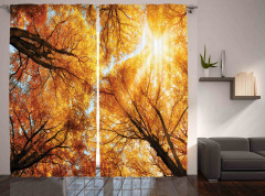 Sonbahar Güneşi Temalı Fon Perde Ağaç ve Gökyüzü