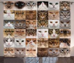 Kedi Resimleri Kolajlı Fon Perde Sevimli Dostlar