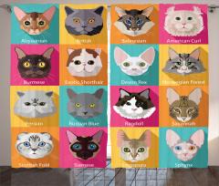 Rengarenk Kedi Türleri Kolajlı Fon Perde Tasarım