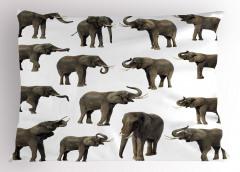 Göz Göze Filler Temalı Yastık Kılıfı Beyaz Arka Planlı