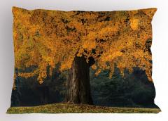 Sararmış Yapraklı Ağaç Yastık Kılıfı Sararmış Yapraklı Ağaç