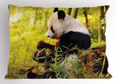 Bambu Yiyen Panda Yastık Kılıfı Orman Asya Yeşil Doğa