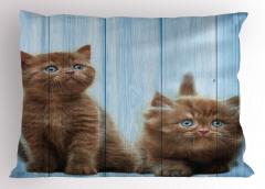 Kahverengi Yavru Kediler Yastık Kılıfı Mavi Ahşap