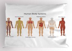 İnsan Vücudu Desenli Yastık Kılıfı Anatomik