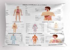 İnsanın Yapısı Desenli Yastık Kılıfı Vücut Sistemleri