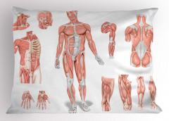 Vücudun Bölümleri Yastık Kılıfı Kas Yapısı