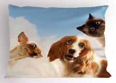 Büyük Gözlü Hayvanlar Yastık Kılıfı Kedi Köpek Sevimli