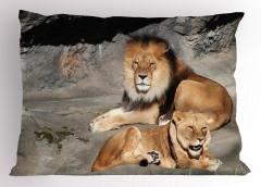 Kahverengi Aslanlar Yastık Kılıfı Vahşi Doğa