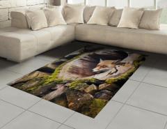 Ağaç Kovuğundaki Tilki Halı (Kilim) Portre Vahşi Doğa