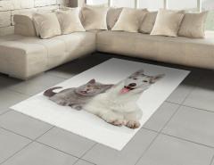 Kedi Köpek Dostluğu Halı (Kilim) Kedi Köpek