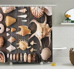 Deniz Kabuğu Desenli Duş Perdesi Ahşap Arka Plan