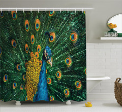Tavus Kuşu Portreli Duş Perdesi Doğa Temalı Lacivert