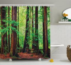 Yağmur Ormanı ve Güneş Işığı Temalı Duş Perdesi Doğa