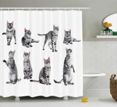 Oynayan Sevimli Kedi Desenli Duş Perdesi Siyah Beyaz