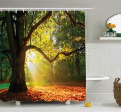 Sonbahar Temalı Duş Perdesi Orman Yeşil Ağaç Yaprak
