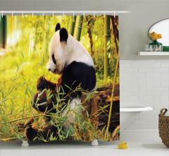 Bambu Yiyen Panda Duş Perdesi Orman Asya Yeşil Doğa