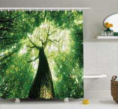 Gün Işığı ve Orman Manzaralı Duş Perdesi Sarı Yeşil