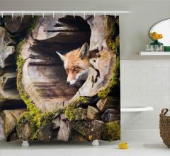 Ağaç Kovuğundaki Tilki Duş Perdesi Portre Vahşi Doğa