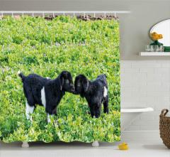 Sevimli Bebek Keçiler Duş Perdesi Bahçe Yeşil Siyah