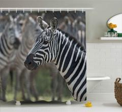 Zebra Portresi Desenli Duş Perdesi Siyah Beyaz