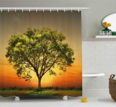 Gün Batımında Ulu Ağaç Duş Perdesi Yeşil Doğa