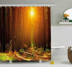 Ormanda Gün Doğumu Duş Perdesi Doğa Ağaç Yaprak
