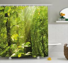 Ormanda Güneşli Bir Sabah Duş Perdesi Gökyüzü Doğa