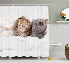 Gri Sarman Kedi Yavruları Duş Perdesi Sevimli