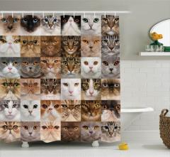 Kedi Resimleri Kolajlı Duş Perdesi Sevimli Dostlar