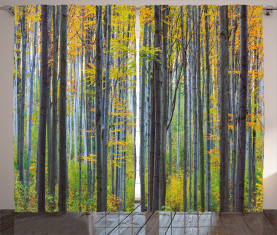 Herbstsaison Buchenwald Vorhang