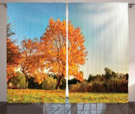 Ahornbaum im Herbst Vorhang