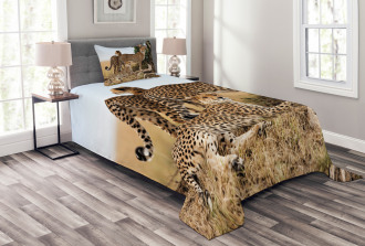 Safari Animal Cheetahs Bedspread Set