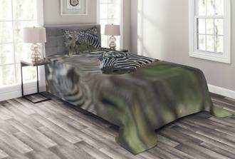 Zebra in Serengati Park Bedspread Set