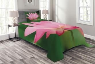 Lotus Lily Blossom Bedspread Set