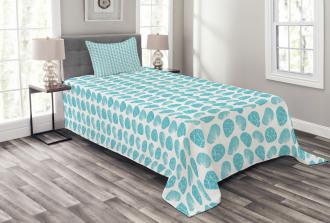 Sunray Venus and Cockle Bedspread Set