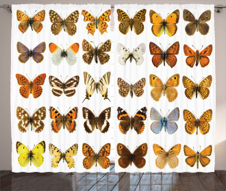 Butterfly Miracle Wing Curtain