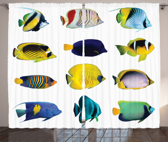 Collage of Sea Animals Curtain