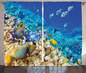 Aquatic Corals Curtain