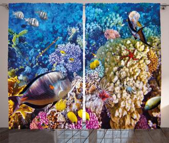 Ocean Beauties Curtain