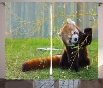 Asian Animal Panda Curtain